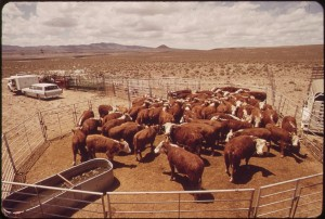 1024px-ANNUAL_SPRING_ROUNDUP_OF_CATTLE_RAISED_ON_EXPERIMENTAL_FARM_OPERATED_BY_EPA'S_LAS_VEGAS_NATIONAL_RESEARCH_CENTER_-_NARA_-_548955